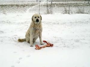 Starving Stray Dog