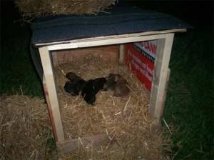 Stray Puppy Rescue