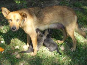 Stray Dog with Litter of Puppies